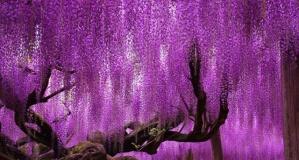 Dünyanın En Güzel Ağaçları