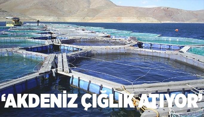 'Akdeniz çığlık atıyor'