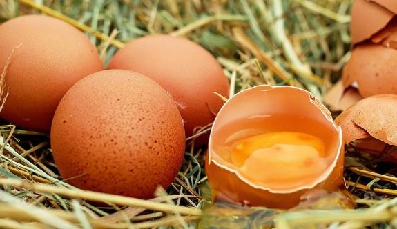 'Kanser ilacı yumurtlayan' tavuklar yetiştirildi!