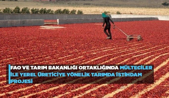FAO ve Tarım Bakanlığı ortaklığında mülteciler ile yerel üreticiye yönelik tarımda istihdam projesi