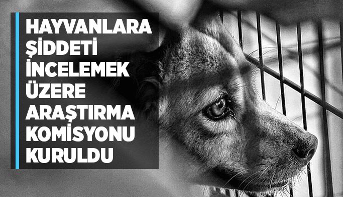 Hayvanlara şiddeti incelemek üzere araştırma komisyonu kuruldu