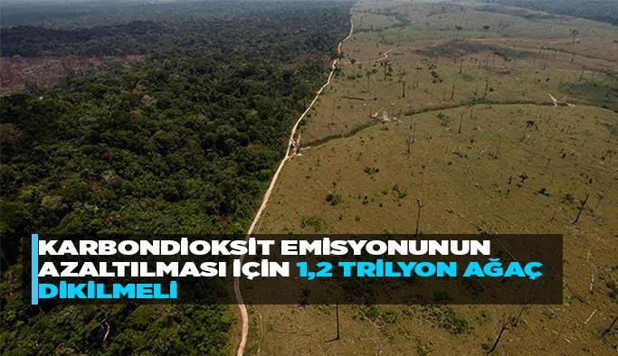 Karbondioksit emisyonunun azaltılması için 1,2 trilyon ağaç dikilmeli