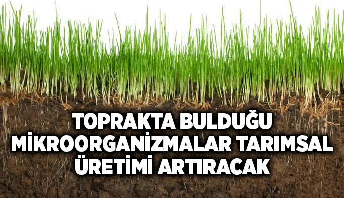 Toprakta bulduğu mikroorganizmalar tarımsal üretimi artıracak