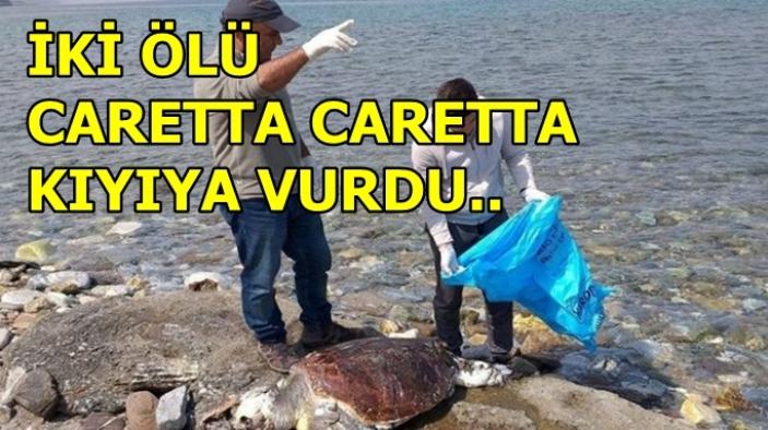 Kuşadası'nda iki adet ölü caretta caretta kıyıya vurdu.