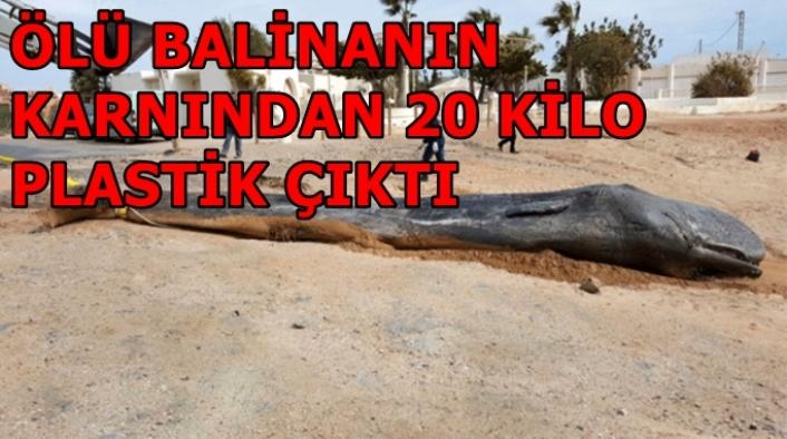 Ölü Balinanın Karnından 20 Kilo Plastik Çıktı