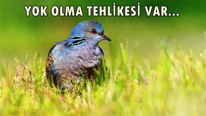Av tehlikesi: Türkiye'de, 20 kuş türü küresel seviyede yok olma tehlikesi altında