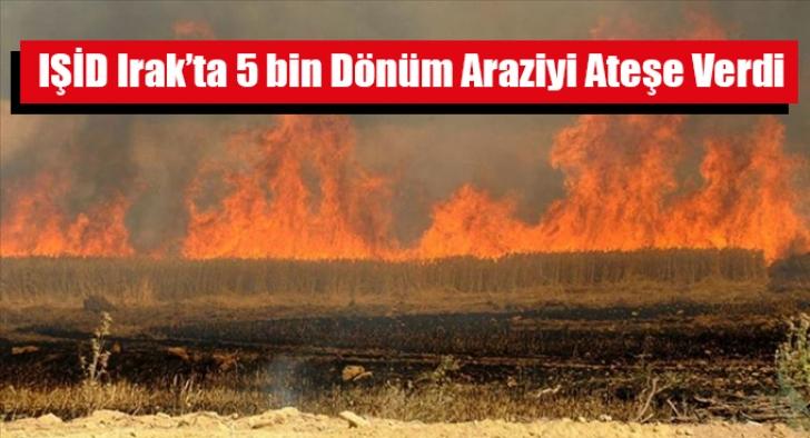 IŞİD Irak'ta 5 bin Dönüm Araziyi Ateşe Verdi