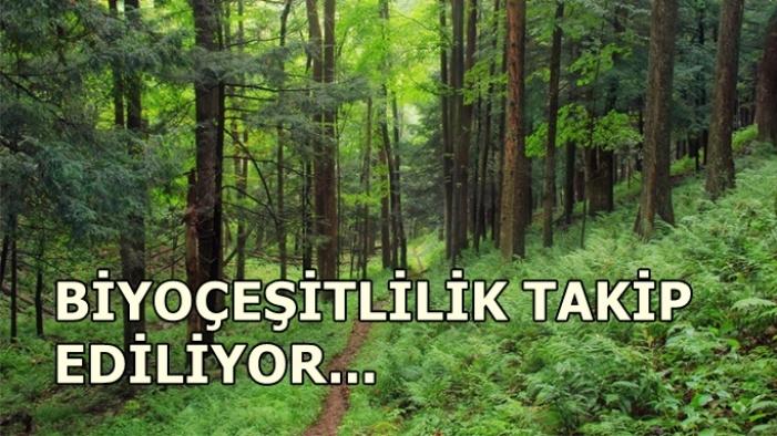 Türkiye'den ormanlar için kıtalar arası iş birliği