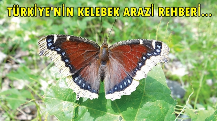 Türkiye'nin Kelebekleri Arazi Rehberi