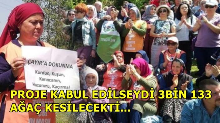 Zonguldak Çaycuma'da proje iptal edildi, 3 bin 133 ağaç kurtuldu