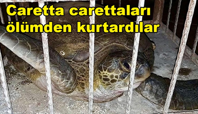 Caretta carettaları ölümden kurtardılar