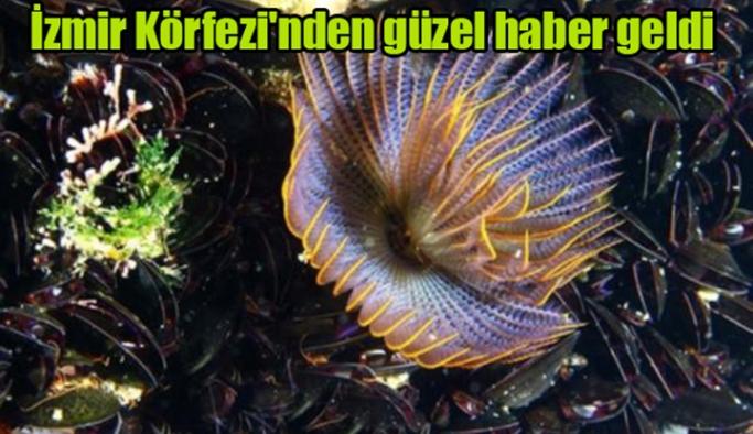 İzmir Körfezi'nden güzel haber geldi!