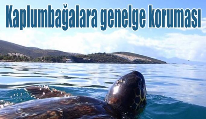 Kaplumbağalara genelge koruması