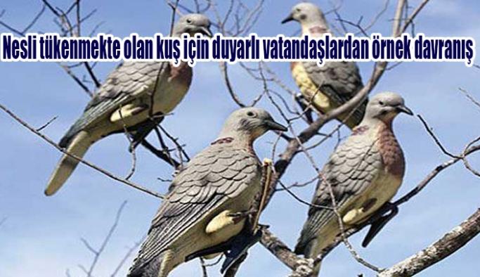 Nesli tükenmekte olan kuş için duyarlı vatandaşlardan örnek davranış