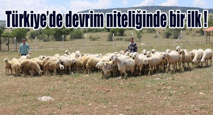 Türkiye'de devrim niteliğinde bir ilk !