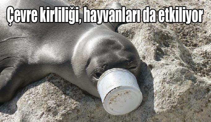 TVHB Merkez Konsey Başkanı Eroğlu: Çevre kirliliği, hayvanları da etkiliyor