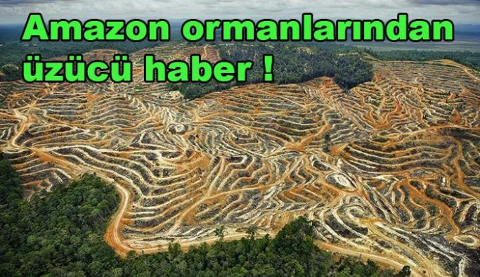 Amazon ormanlarından üzücü haber !