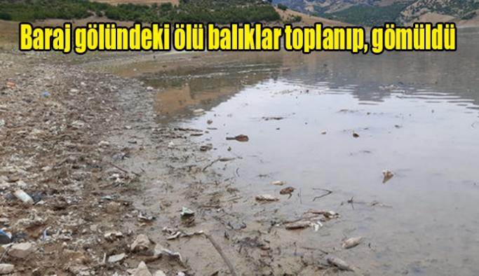 Baraj gölündeki ölü balıklar toplanıp, gömüldü