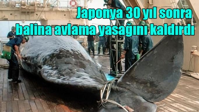 Japonya 30 yıl sonra balina avlama yasağını kaldırdı