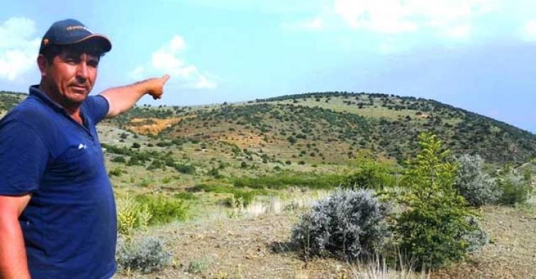 Eskişehir'de, maden uğruna ağaçlar feda edilecek