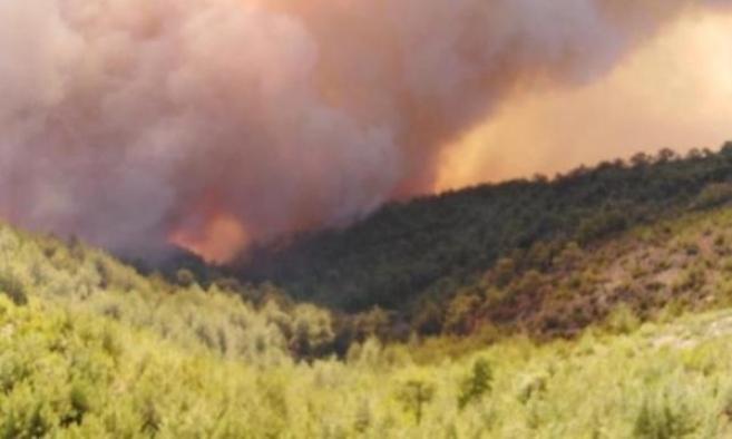 Yine bir orman yangını : Milas'ta yangına müdahaleler devam ediyor