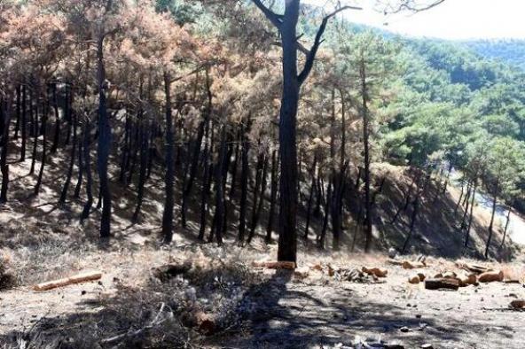 İzmir'de yanan orman alanı için ilk fidan 11 Kasım'da dikilecek