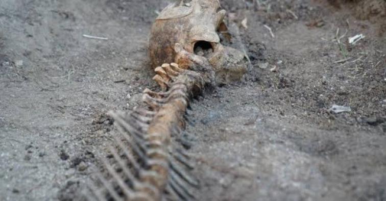 5 yıldır gömülü olan yunusun iskeleti EÜ Tabiat Tarihi Müzesi'nde