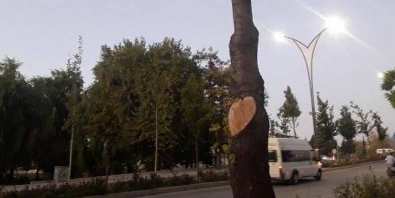İşyerinin önündeki 2 ağacı kesen esnafa 50 bin TL para cezası