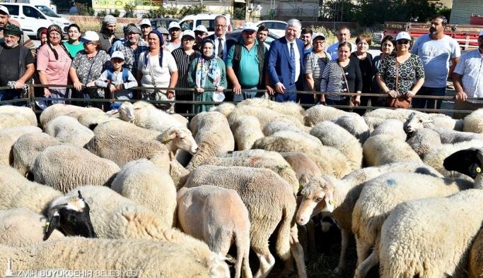 İzmir Büyükşehir Aliağalı üreticilere küçükbaş hayvan hibe etti