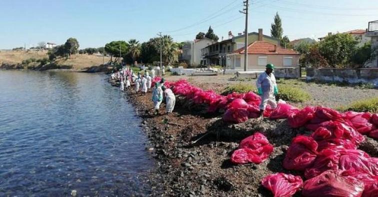 İzmir Foça'da deniz kirliliğine neden olan firmaya ceza kesildi!