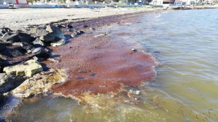 """İzmir'de sahile fueloil vurdu"""
