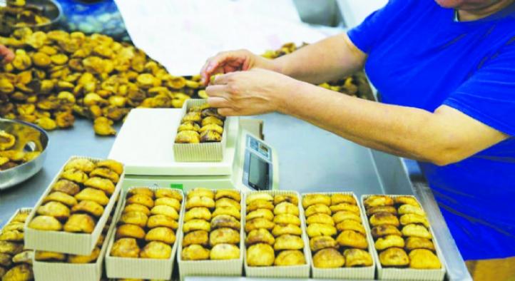Kuru incir ihracatta rekora koşuyor