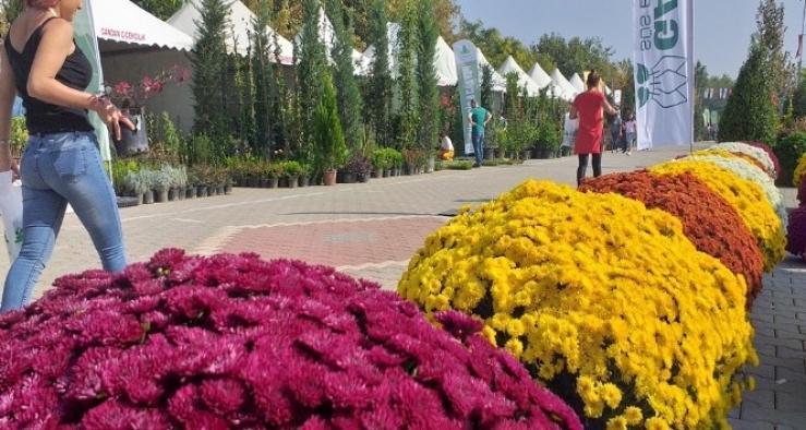 Ödemiş'te 2 bin aile bitki üretimi ile uğraşıyor