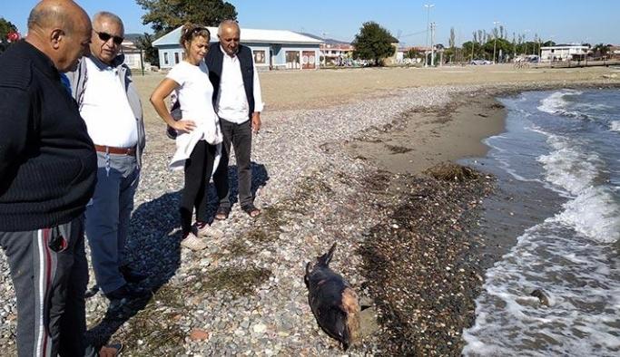 Yavru yunus kıyıya vurdu!