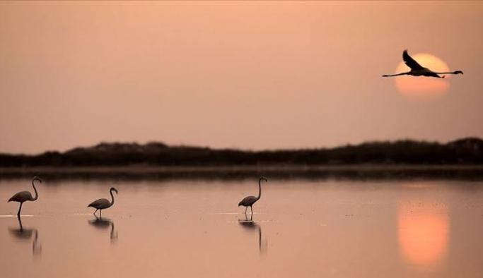 2 milyar 900 milyon kuş yok oldu