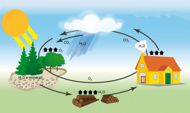 Karbon döngüsü nedir?
