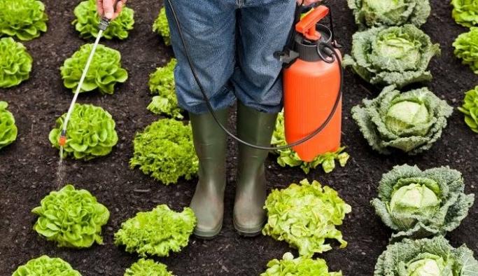 Pestisit nedir, zararları ve etkileri nelerdir?