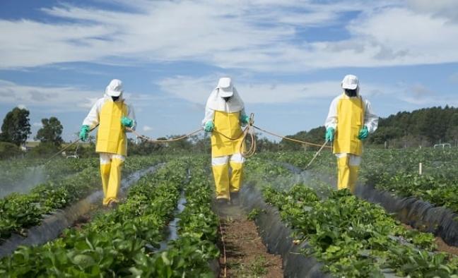 Tarımda kullanılan zehirli kimyasallar yaşamı tehdit ediyor!