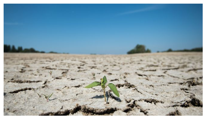İklim değişikliği: '2010'lu yıllar tarihin en sıcak 10 yıllık dönemi olacak'