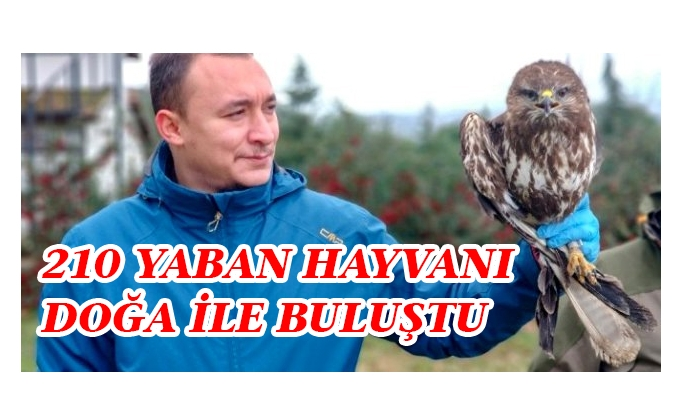 2019 yılında Bursa'da 210 yaban hayvanı doğa ile buluştu