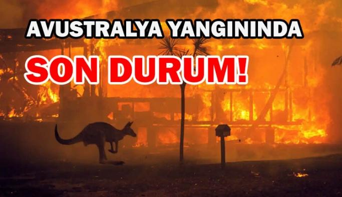 Avustralya yangınında son durum!
