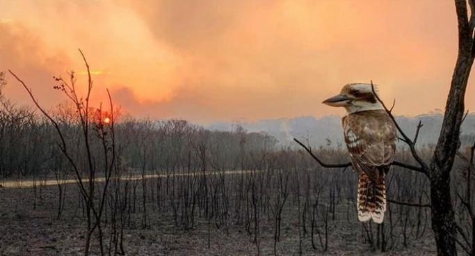 Avustralya Başbakanından yangın itirafı: 'Hata yaptık'