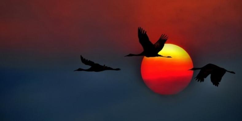 Göçmen kuşları bekleyen tehlikeli yolculuk