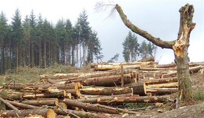 Pandemi sürecinde orman alanları 6 bin 500 kilometrekare azaldı!