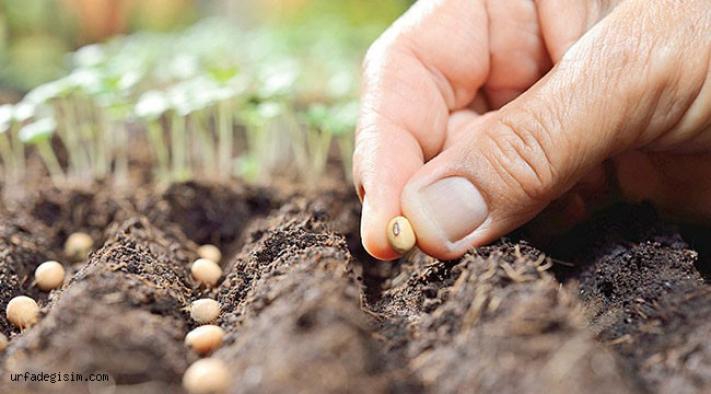 TEMA Vakfı'ndan geleceğe 50 bin tohum
