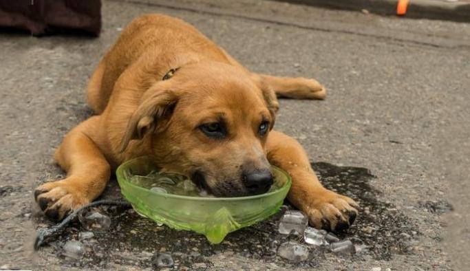 Atık plastikler sokak hayvanlarına su ve yem kabı oldu