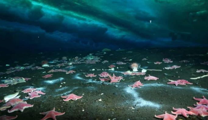 Korkulan oldu: Antarktika'da ilk kez deniz yatağında metan sızıntısı keşfedildi