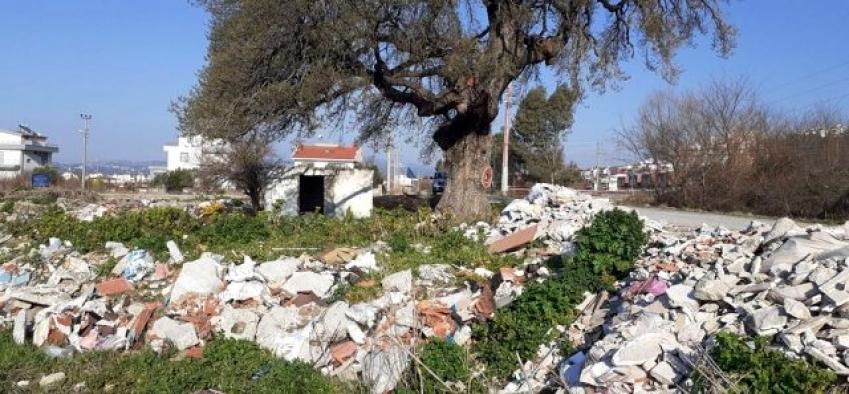 Kuşadası'nda 300 yıllık anıt ağacın çevresini hafriyat dökerek, çöplüğe çevirdiler