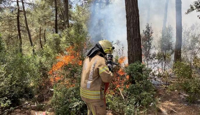 Sarıyer'de 500 metrekarelik ormanlık alan yandı: 1 kişi gözaltında