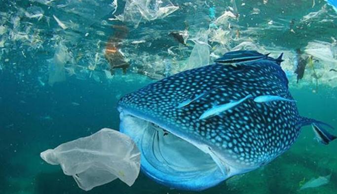 'Tek Kullanımlık Plastikler Yasaklansın' kampanyasına 500 bin kişiden destek